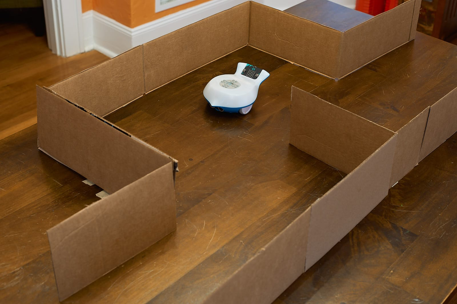 This picture shows a Finch in a cardboard maze.